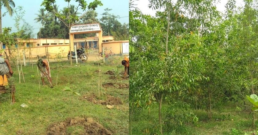 Biswali trees