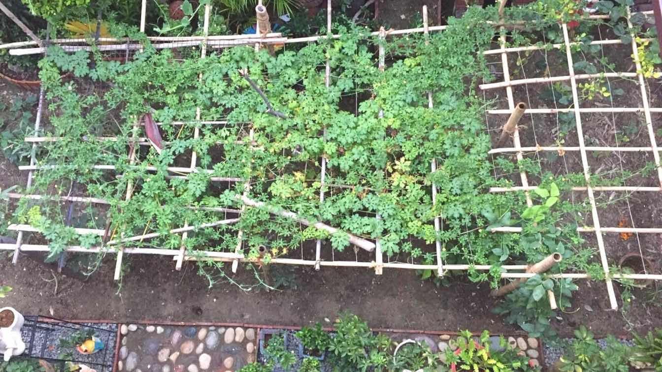 Compartilhamento de especialistas sobre como cultivar vegetais de verão em casa 2