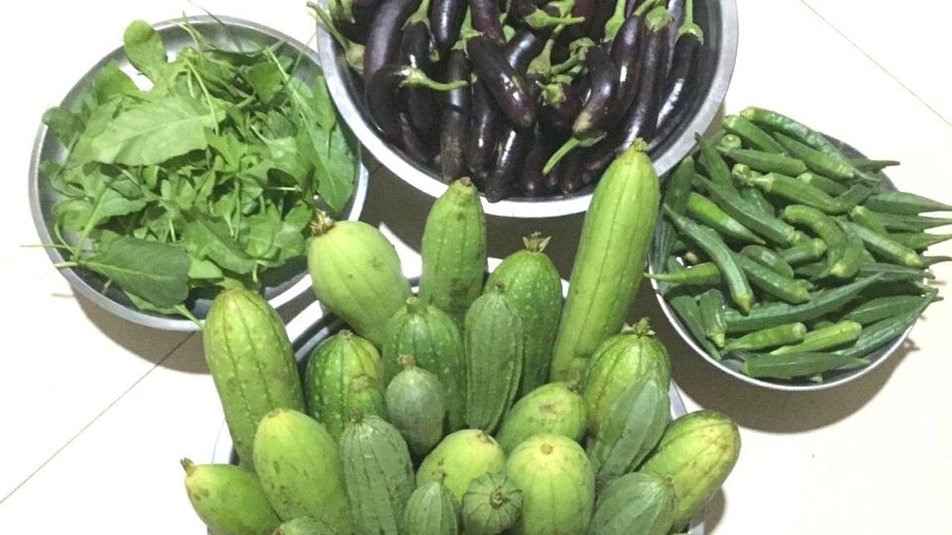 Compartilhamento de especialistas sobre como cultivar vegetais de verão em casa 3