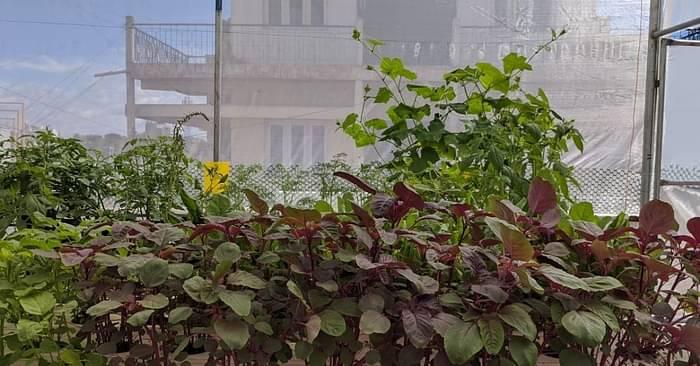 hydroponics aquaponics urban gardening