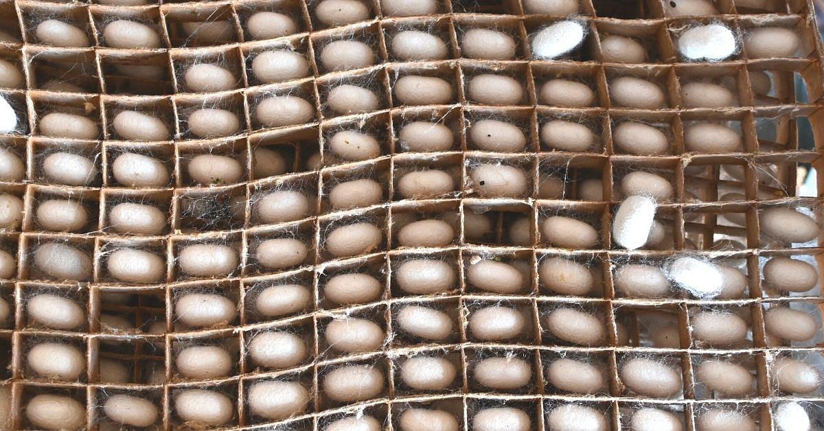 Karnataka Startup's AI Technology Helps 5500 Silk Farmers Increase Income By 30%