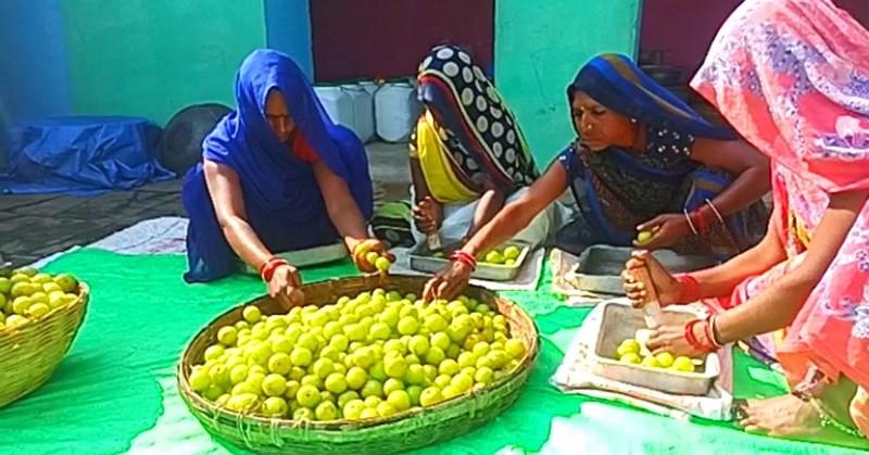 Women making Marmalade (amla Murabba) in Panna, Madhya Pradesh