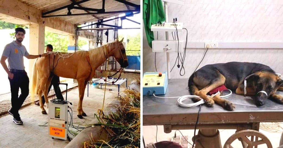 Animal treatment therapy