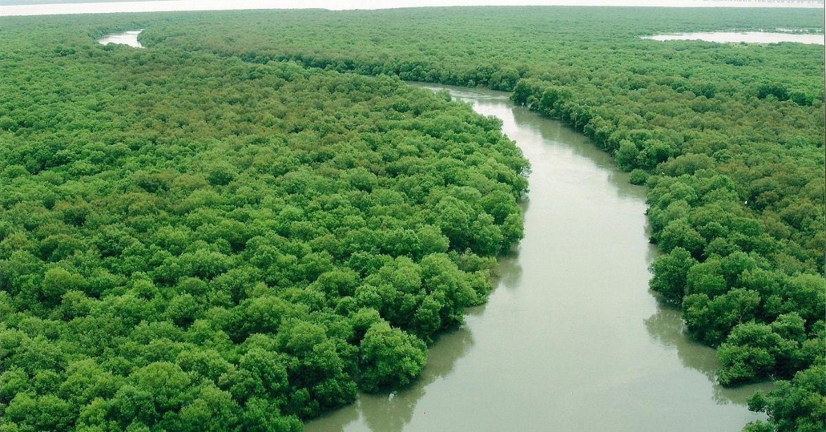 india mangrove initiative