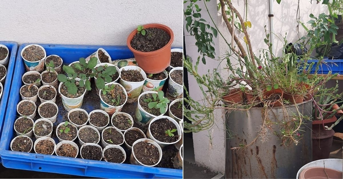 Plants at home - recycled containers for growing plants.